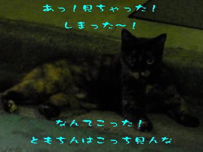10_1709a.jpg