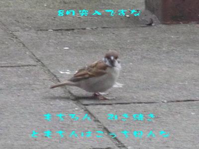 11_170801.jpg