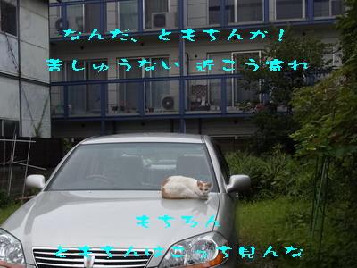 11_170822a.jpg