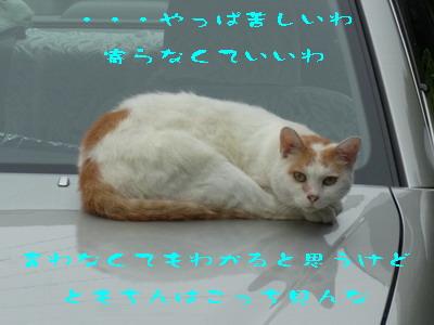 11_170822b.jpg