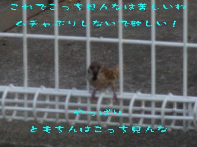 13_170827.jpg