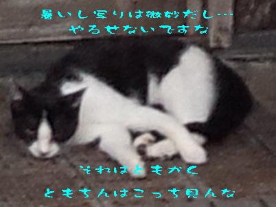14_170722a.jpg