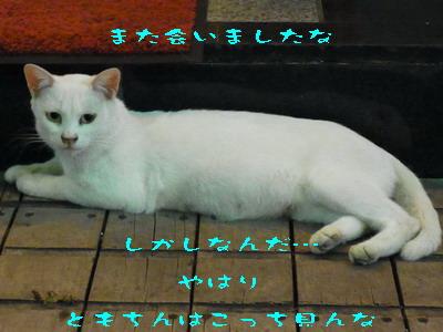 14_170815a.jpg