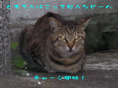 14_170909a.jpg