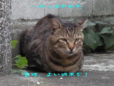 14_170909b.jpg