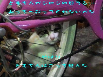 14_170925b.jpg