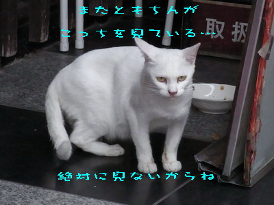14_170927b.jpg