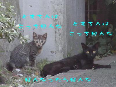 15_170802.jpg