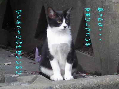 15_170928b.jpg