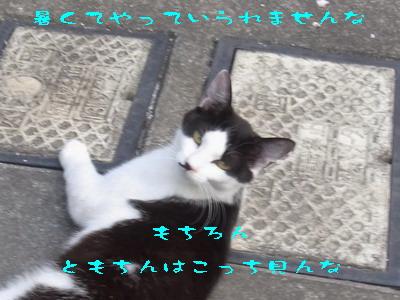 16_170711a.jpg