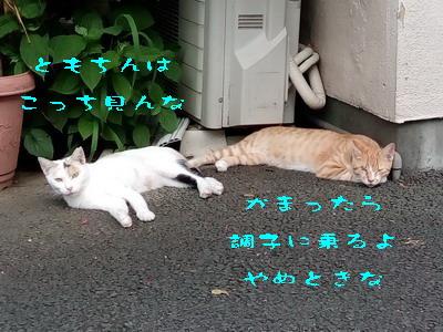 16_170803a.jpg