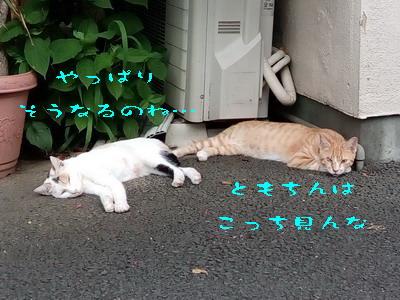 16_170803b.jpg
