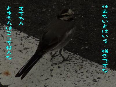 16_170821.jpg