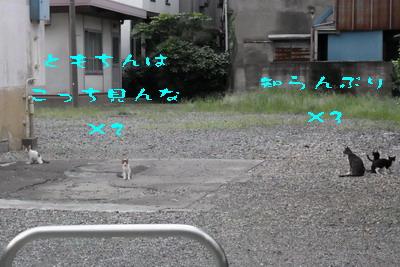 170905c.jpg